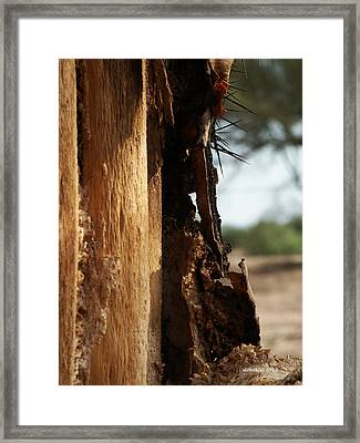 Framed Print featuring the photograph Old Soldier by Dick Botkin