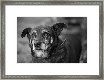 Framed Print featuring the photograph Old Soul by Antonio Jorge Nunes