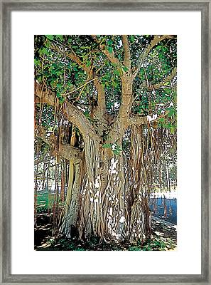 Old Soul Framed Print by Terry Reynoldson