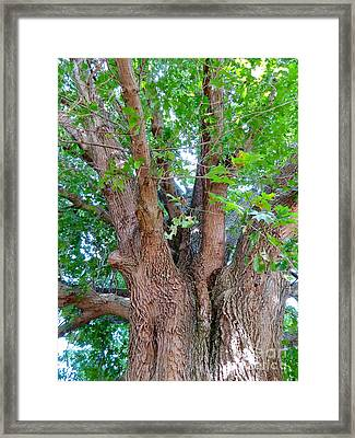 Old Souls Oak Framed Print