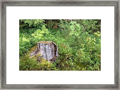Old Stump Framed Print by Merja Waters