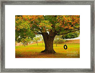 Old Tire Swing Framed Print by Terri Gostola