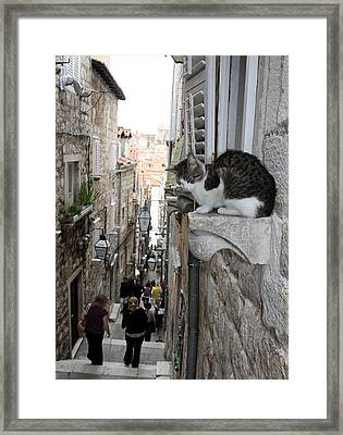 Old Town Alley Cat Framed Print by David Nicholls