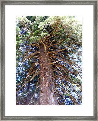 Old Tree 2 Framed Print