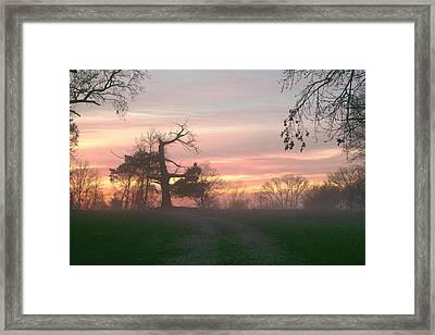 Old Tree At Sunset Framed Print
