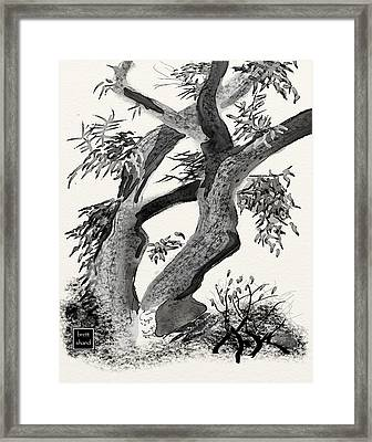 Old Tree Framed Print by Brett Shand