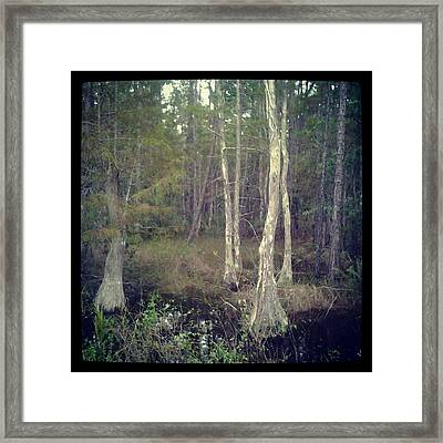 Old Tree Framed Print by Chasity Johnson