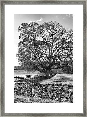 Framed Print featuring the photograph Old Tree In Black And White by John S