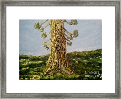 Old Tree In Spring Light Framed Print
