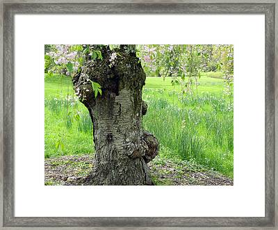 Framed Print featuring the photograph Old Tree In Spring by Yue Wang