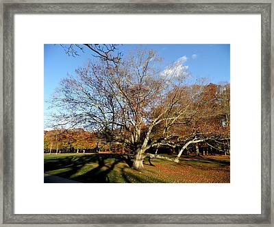 Old Tree In The Park Framed Print