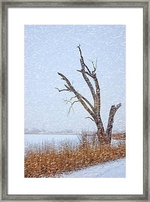 Old Tree In Winter Framed Print by Nikolyn McDonald