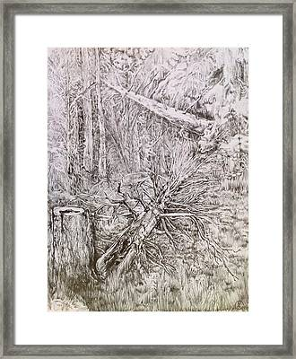 Old Tree Framed Print by Iya Carson