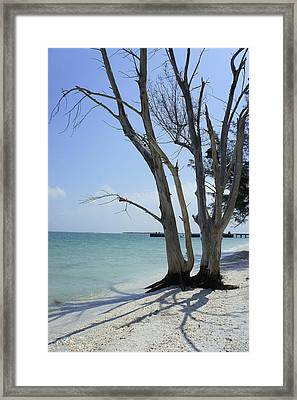Framed Print featuring the photograph Old Tree by Laurie Perry