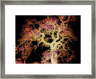 Old Tree New Bark Framed Print