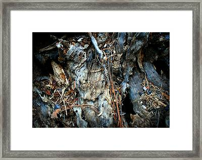 Old Tree Number 2 Framed Print