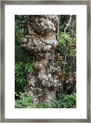 Framed Print featuring the mixed media Old Tree by Rafael Salazar