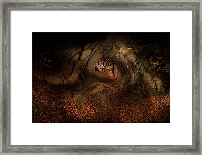 Old Tree Roots Paxton House Grounds. Framed Print