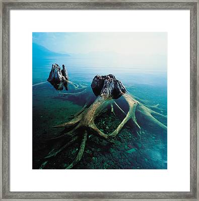 Old Tree Trunks Underwater Framed Print by Panoramic Images