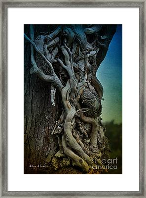 Old Vine Framed Print by Mary Machare