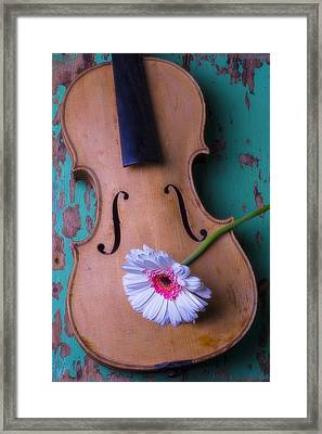 Old Violin And White Daisy Framed Print