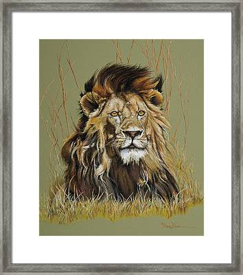 Old Warrior African Lion Framed Print