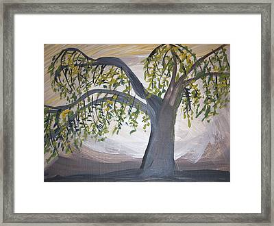 Old Willow Framed Print by Cathy Anderson