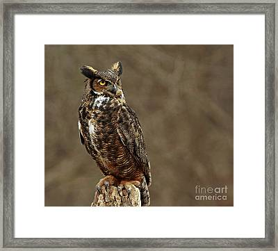 Old Wise One  Framed Print by Inspired Nature Photography Fine Art Photography