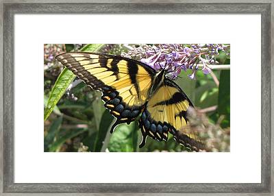 Framed Print featuring the photograph Old World Swallowtail by Jennifer Wheatley Wolf