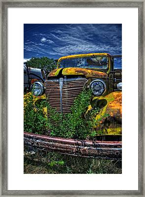 Framed Print featuring the photograph Old Yeller by Ken Smith