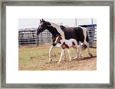 Oldenburg Mare And Foal Framed Print