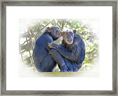 Olderly Chimpanzees Embracing Fade To White Version Framed Print by Jim Fitzpatrick