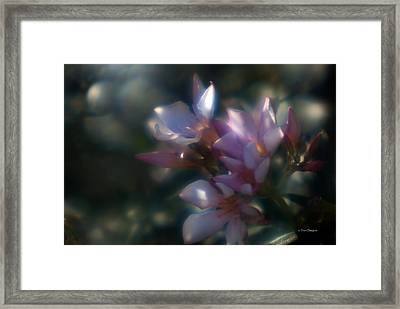 Oleander 2 Framed Print