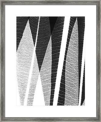 Oleander Leaves Framed Print by Albert Koetsier X-ray