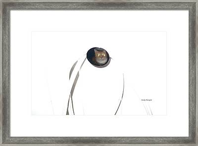Olga Cat Reflected In Drawer Knob Framed Print by Kathy Barney