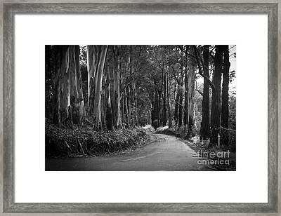 Olinda Road Maui Hawaii Framed Print by Sharon Mau