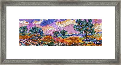 Olive Grooves Provence Panoramic Landscape Framed Print by Ginette Callaway