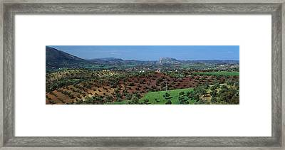 Olive Groves Andalucia Spain Framed Print by Panoramic Images