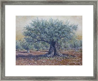 Olive In The Summer  Framed Print