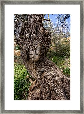 Olive Monster Framed Print