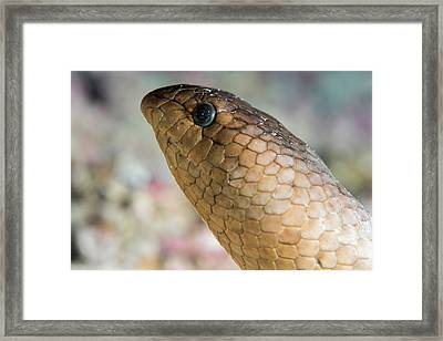 Olive Sea Snake Head Framed Print by Louise Murray