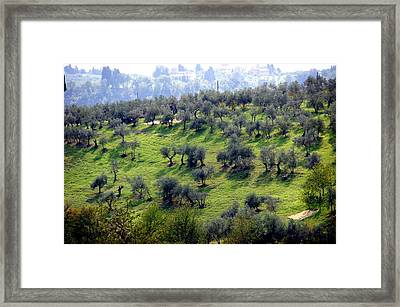 Olive Trees And Shadows Framed Print