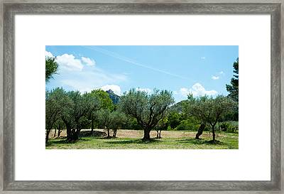 Olive Trees In Front Of The Ancient Framed Print by Panoramic Images