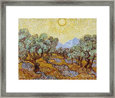 Olive Trees Framed Print by Vincent Van Gogh