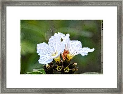 Olive You - Olive Flower Art By Sharon Cummings Framed Print by Sharon Cummings