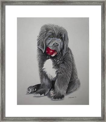 Oliver's Red Ball Framed Print by Sharon Nummer