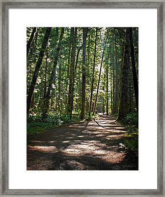 Olympic National Park Forest Path Framed Print by Julie Magers Soulen