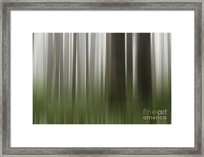 Olympic Trees Framed Print