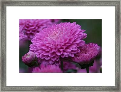 Omg Pink Framed Print