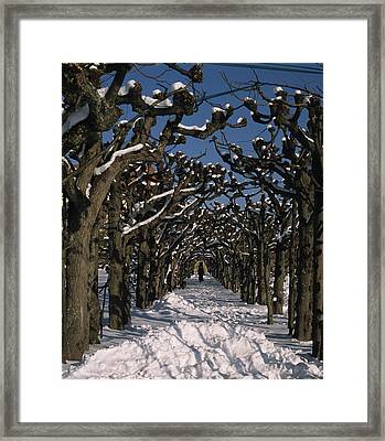 On A Cold Winter Day Framed Print by Angela Bruno